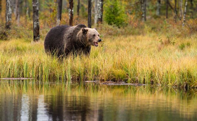 Be Careful When You Hike in a Bear Country